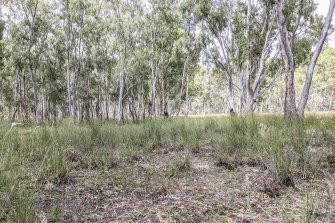 The kind of landscape where the swamp yabby lives in deep burrows.