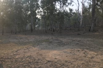 Prior to the recent rains, much of the  Guy Fawkes River National Park was either dry or burnt following the bushfires.