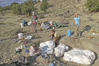 Researchers prepare fossils to be airlifted from the Rainbows and Unicorns Quarry on Grand Staircase-Escalante National Monument to the Paria River District paleontology lab in Kanab, Utah.
