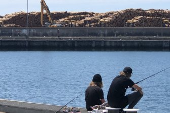 Softwood logs were stockpiled around the port of Portland after China banned timber imports from Australia.