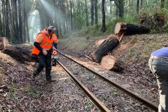 Trees seen over the Puffing Billy train tracks at Selby-Aura Road, Selby after severe storm damage.