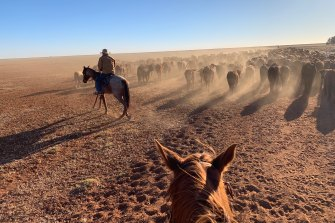 Sam Kyprianou's view of the cattle station from atop a horse, as he worked during his Queensland gap year.