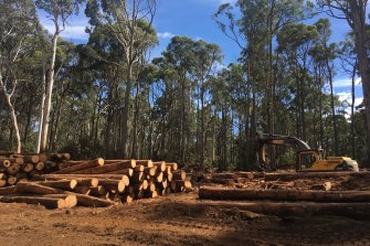 The fires are a fresh blow to the industry, still reeling from the government's decision to ban native logging by 2030.