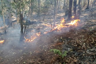Bushfires in Gondwanan rainforests of northern NSW have placed many threatened species at risk, ecologists say.