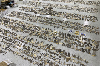 In January US authorities confiscated a shipment of shark fins worth up to $1 million at the Port of Miami.