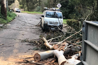 Power wires and tree down in Kaola Street, Belgrave.