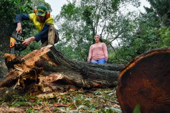 Nick Schill milling the fallen trees on site at Julia Hall's friend's Kalorama property, where 14 blackwoods fell.