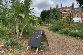 Brixton Orchard has become a haven for bees and beetles.