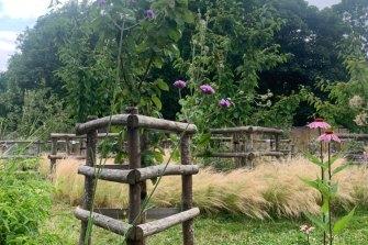 Verbena bonariensis and Echinacea purpurea grow among fruit trees and grasses in Brixton Orchard.
