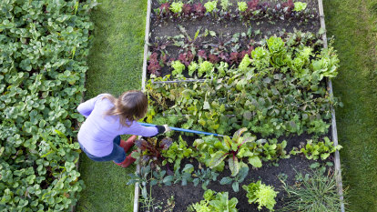 Gardening workshops offer food for thought