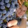 Students learn the art of fine winemaking, but tasting is off the menu