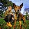 Post-lockdown pets seek new homes, new hope