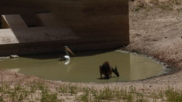 The Menindee region has been hit by several heatwaves, including four days in a row above 47 degrees last week.