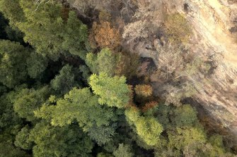 An aerial view of the main Wollemi Pine grove immediately after the bushfire.