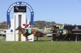 A nine-race card has been set down for Kembla Grange on Thursday.