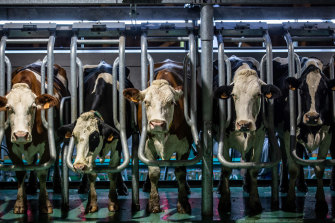 The company says it can make full dairy cheese in its labs without the need for cows.