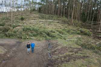 Sam and Jay McGown standing on Whitelaws road, Yinnar which was completely blocked by plantation bluegums blown over by last week's massive storm.