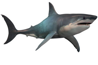 """The extinct shark megalodon was similar to the great white today (just at a much bigger scale), which scientists say underscores the """"success of the model""""."""