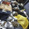 Manila airport customs officials find 1529 live exotic turtles in luggage