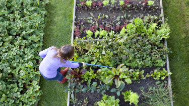 Gardening is the perfect antidote to many mental health problems.