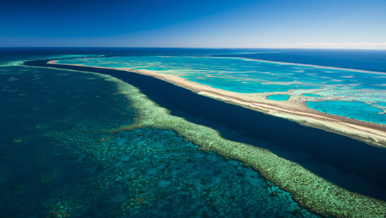 The agency charged with protecting the Great Barrier Reef from damage, had to scale back its monitoring of coral bleaching because it didn't have enough funding.