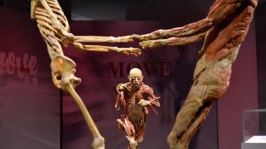 A parliamentary inquiry wasn't able to establish the identity of the remains of Chinese people displayed at the 'Real Bodies' exhibit.