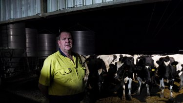 Riverina dairy farmer Malcolm Holm in front of his milking herd at his Finley, NSW farm.