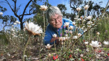 Sally White gets up close to native flowers in Anglesea.