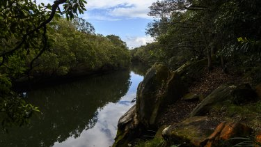 Wolli Creek Valley is a unique natural asset in Sydney's inner south.
