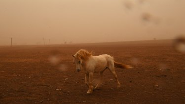 A horse pictured in dust as winds hit Dubbo.