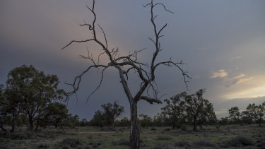 Dawn breaks near Bourke, on the drought-afflicted Darling River.