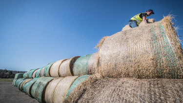 A Rapid Relief Team volunteer help distribute 450 bales of hay to drought-stricken farmers in the Goulburn area.