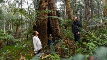 Belinda Taylor, partner Tom Graham and son Octavius stand amid the gums at their property.