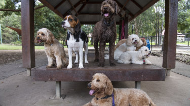 Outdoor doggy daycare owner Alicia Spano says demand for her services is higher than ever.