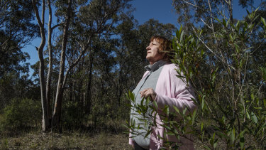 Wildlife campaigner Sue Gay says the protection of koalas is of utmost importance.