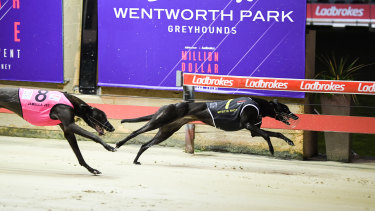 The Million Dollar Chase at Wentworth Park.