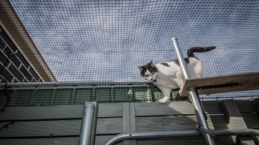 Cat containment is being expanded into Whitlam in the Molonglo Valley.