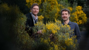 Psychae Institute co-directors Jerome Sarris and Daniel Perkins with acacia, a native Australian plant containing DMT, a key ingredient used in ayahuasca preparations.