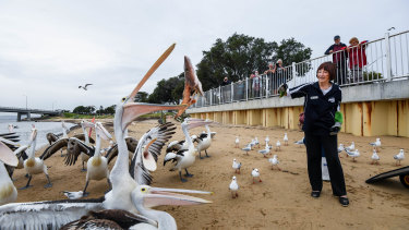 Val Dohl from the San Remo Fishermans Co-operative feeding the pelicans.