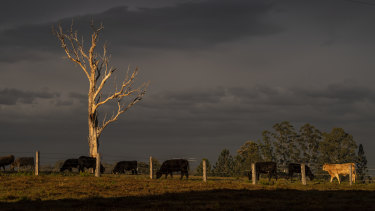 Drought-affected country near Grafton in NSW.