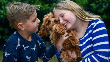 Alice Warry, 10, and her brother, Tommy, 8, with their new toy cavoodle, Ralphy.