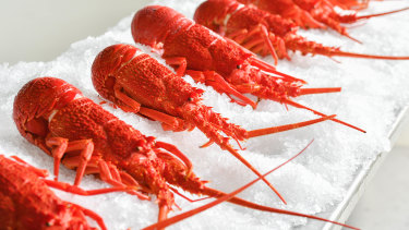 Australian lobsters might not make it to restaurants and markets after being held up at Chinese airports.