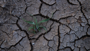 The drought is causing soil to dry out and contract, causing havoc to Sydney's water and sewage pipes.