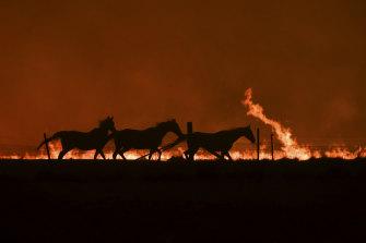 Horses fleeing.