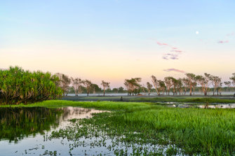Sunrise of the Yellow Water Billabong in Kakadu National Park, in the Northern Territory.