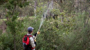 A volunteer helps Parks Victoria staff on Friday to cool the bats by spraying water at Yarra Bend Park in Melbourne.