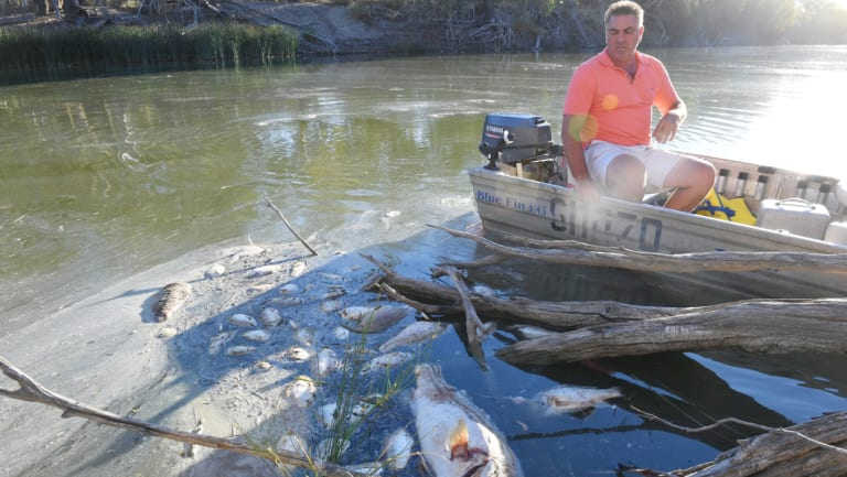 Graeme McCrabb on his tinnie in the Darling River, floating among dead Murray cod, bony bream, golden and silver perch and carp.