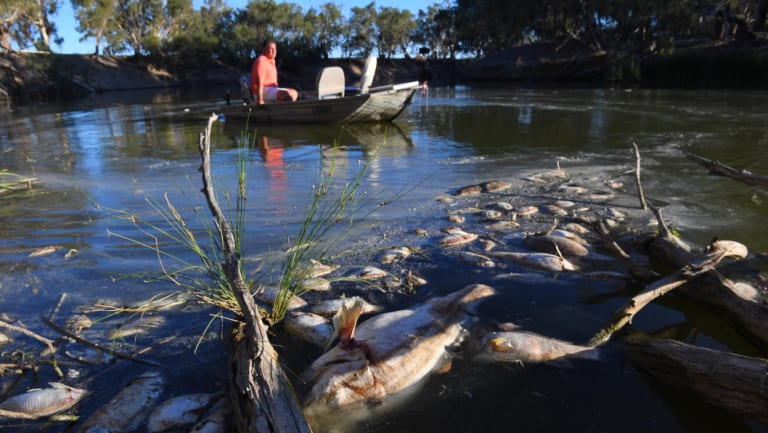 Graeme McCrabb, a Menindee resident, sits in his boat amidst some of the thousands of dead fish killed this week in the Menindee Weir Pool.