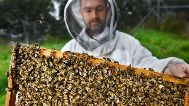 Benedict Hughes provides hives as part of the movement of 4.2 billion bees to help pollinate almond farms.