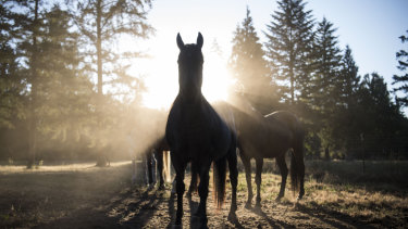 Justice (front) shares a pasture with three other rescued horses: Lincoln, Badger and Flick.